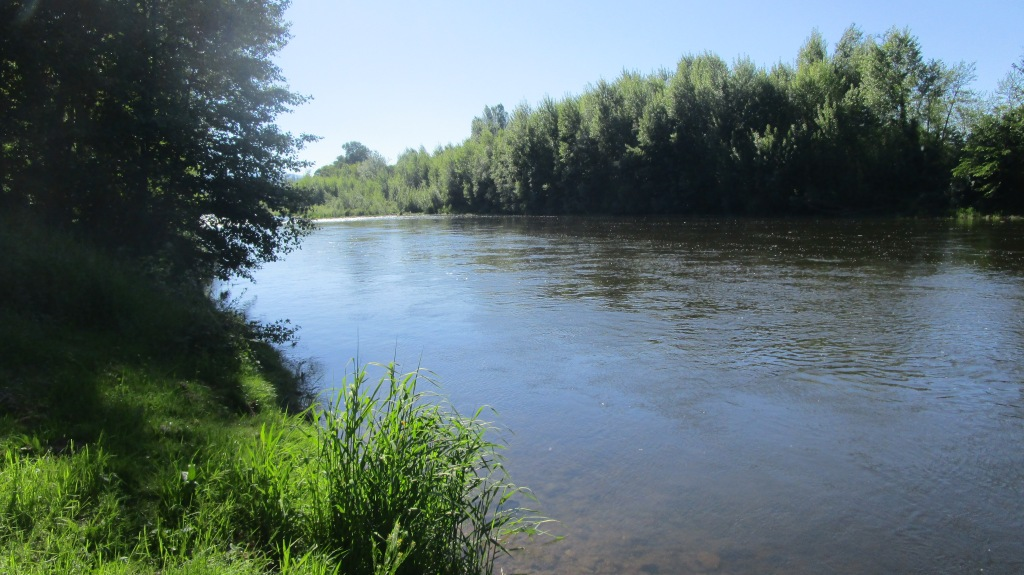 Bank of the Allier River