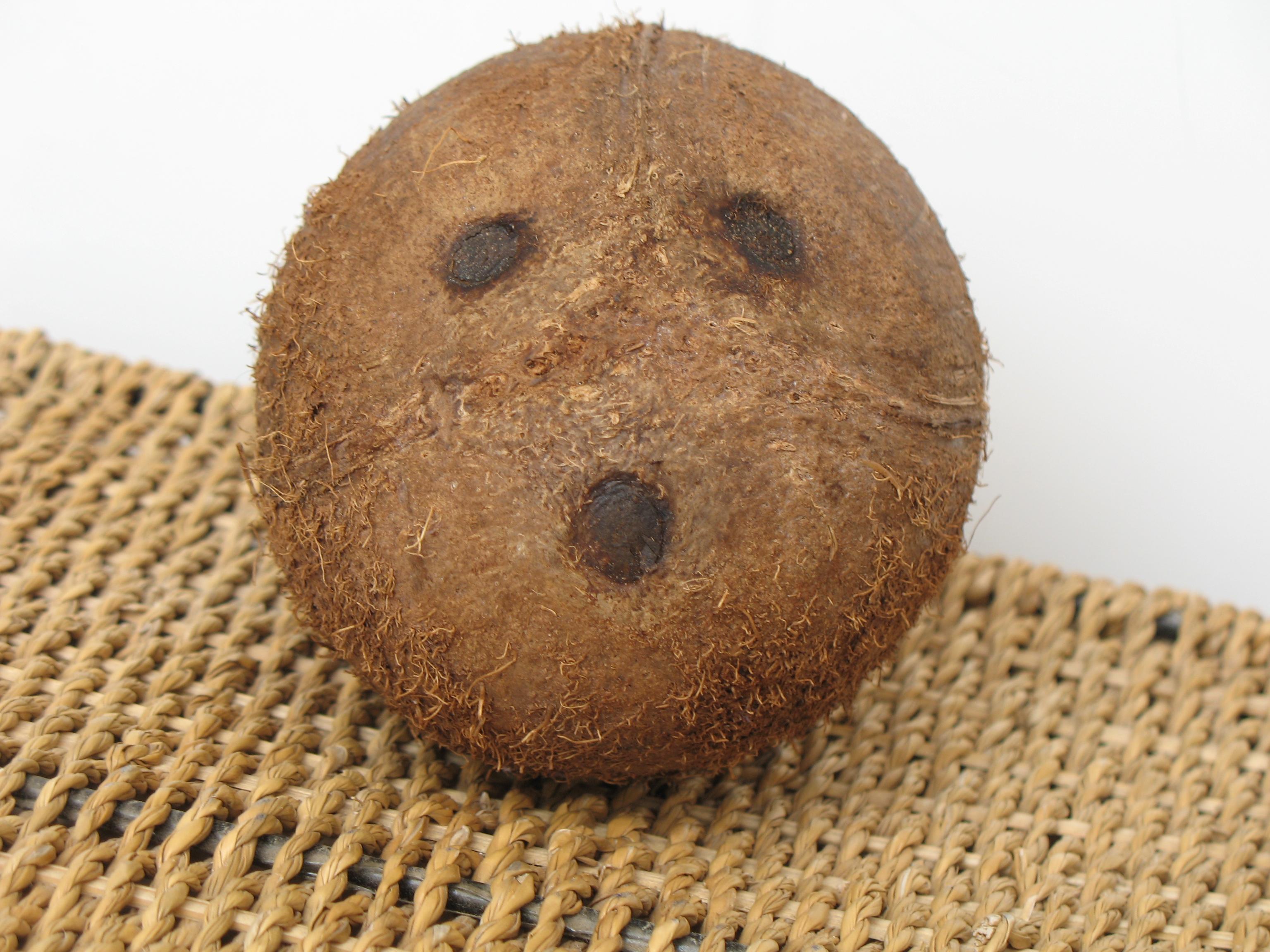 Coconut resembling a human face, head