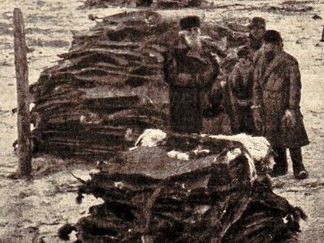 Siberian Fur Market