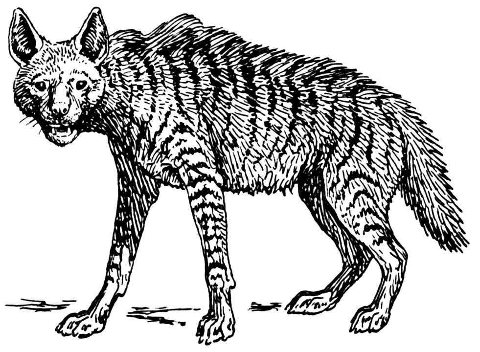 "A hyena, or ""kaftar"" in Persian, was the name given to female witches in medieval India during the 14th century Delhi Sultanate."